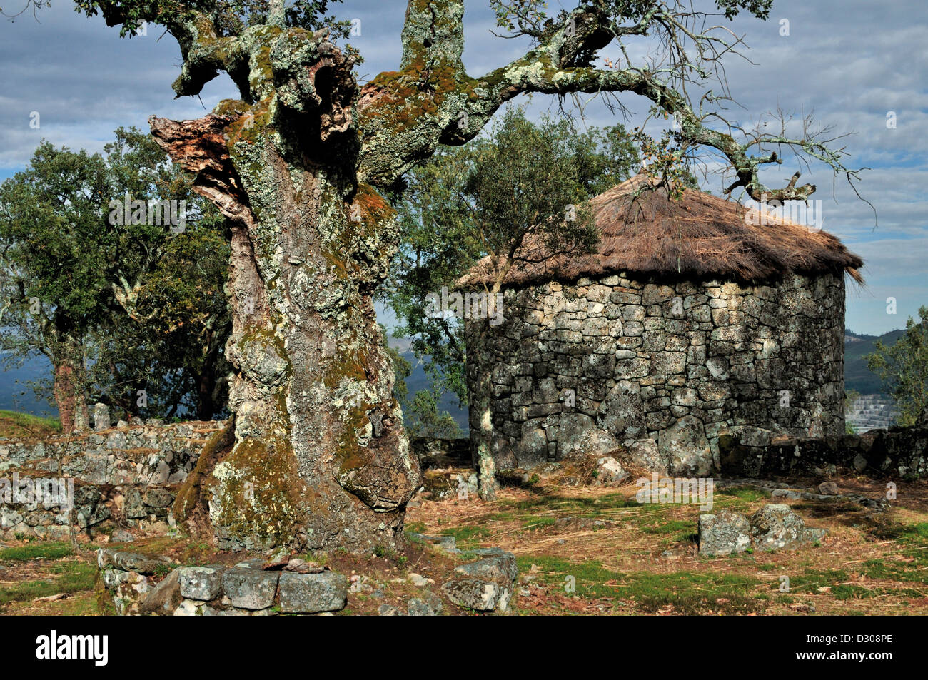 Portugal, Minho: Celtic iberian round house and thousand year old cork oak in Citania de Briteiros - Stock Image