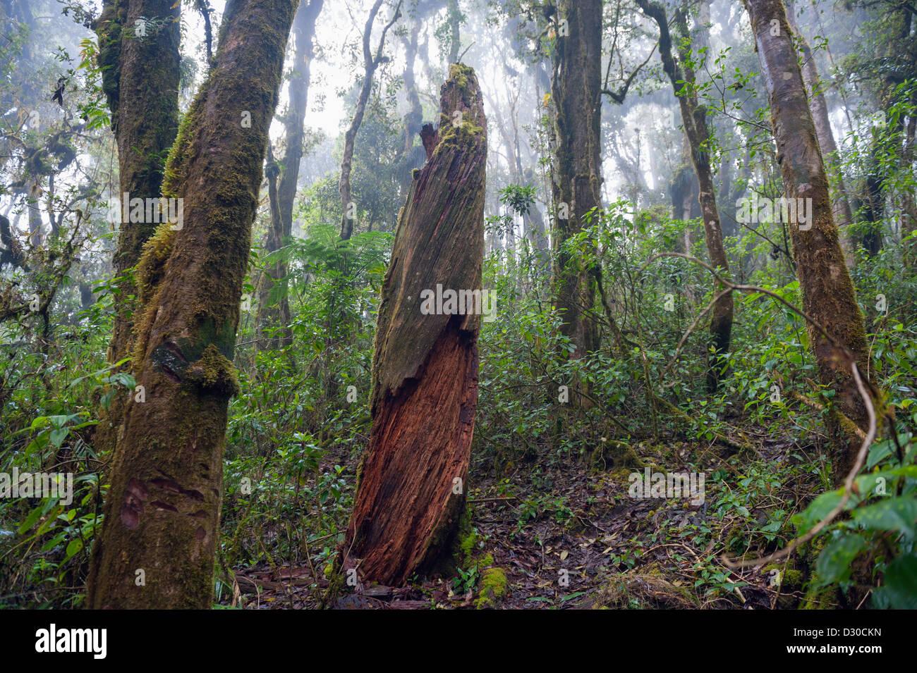 Parque Nacional Montana de Celaque, Gracias, Honduras, Central America - Stock Image