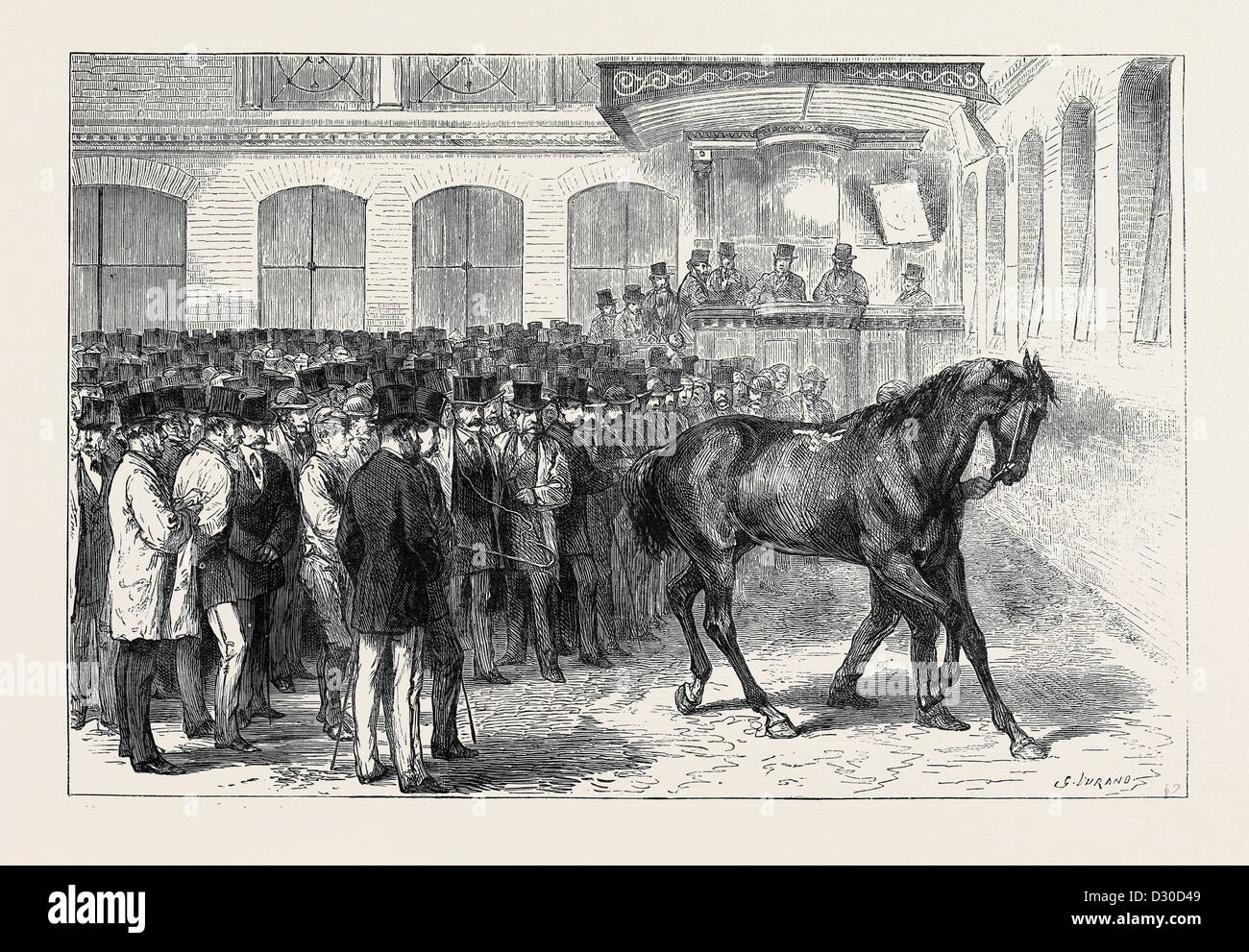 SALE OF THE HORSES OF THE TENTH HUSSARS AT TATTERSALL'S: 'CRUSADER' UNDER THE HAMMER - Stock Image