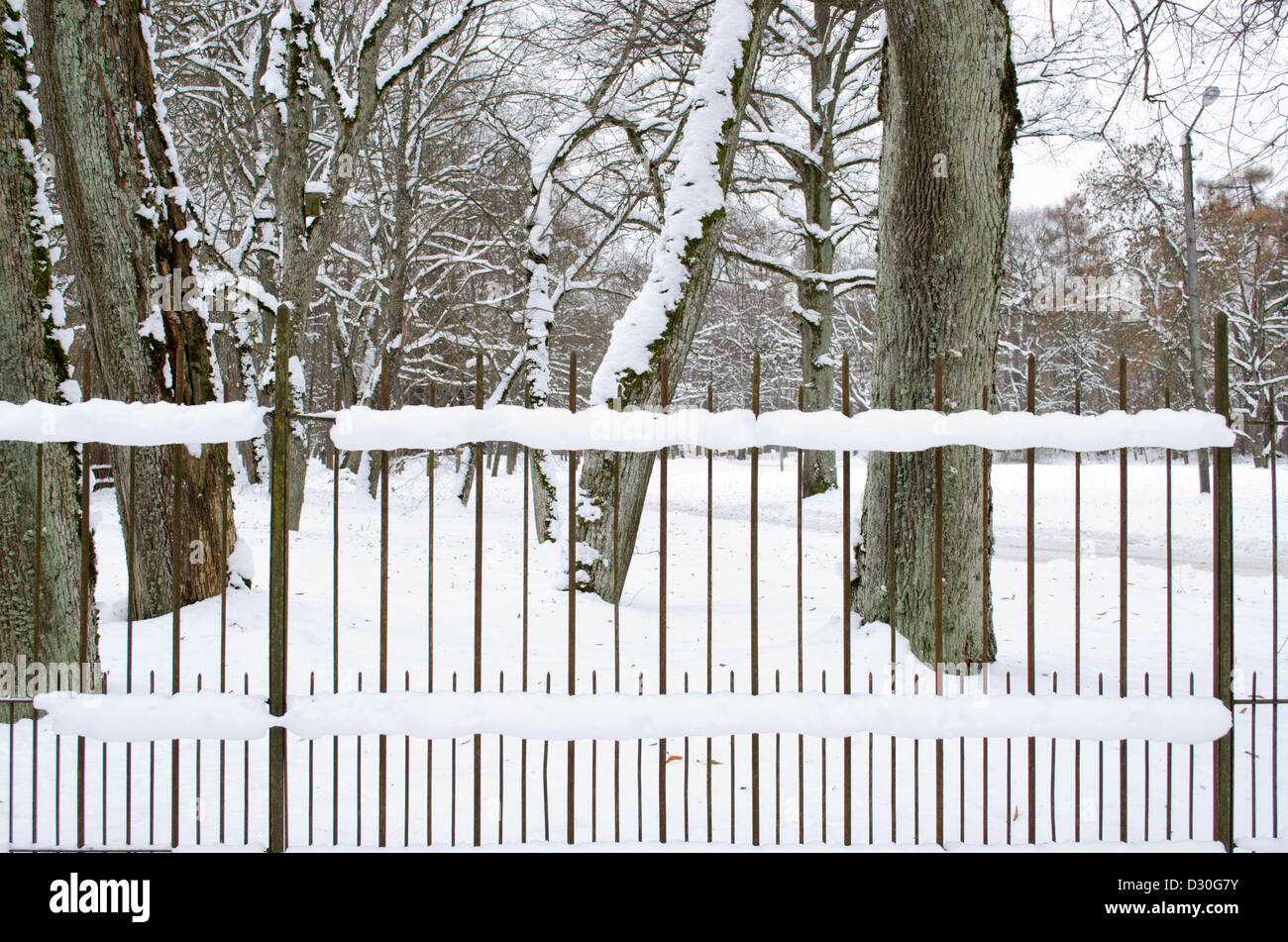 retro rusty metal fence covered with snow in park and old tree trunks in winter. Stock Photo