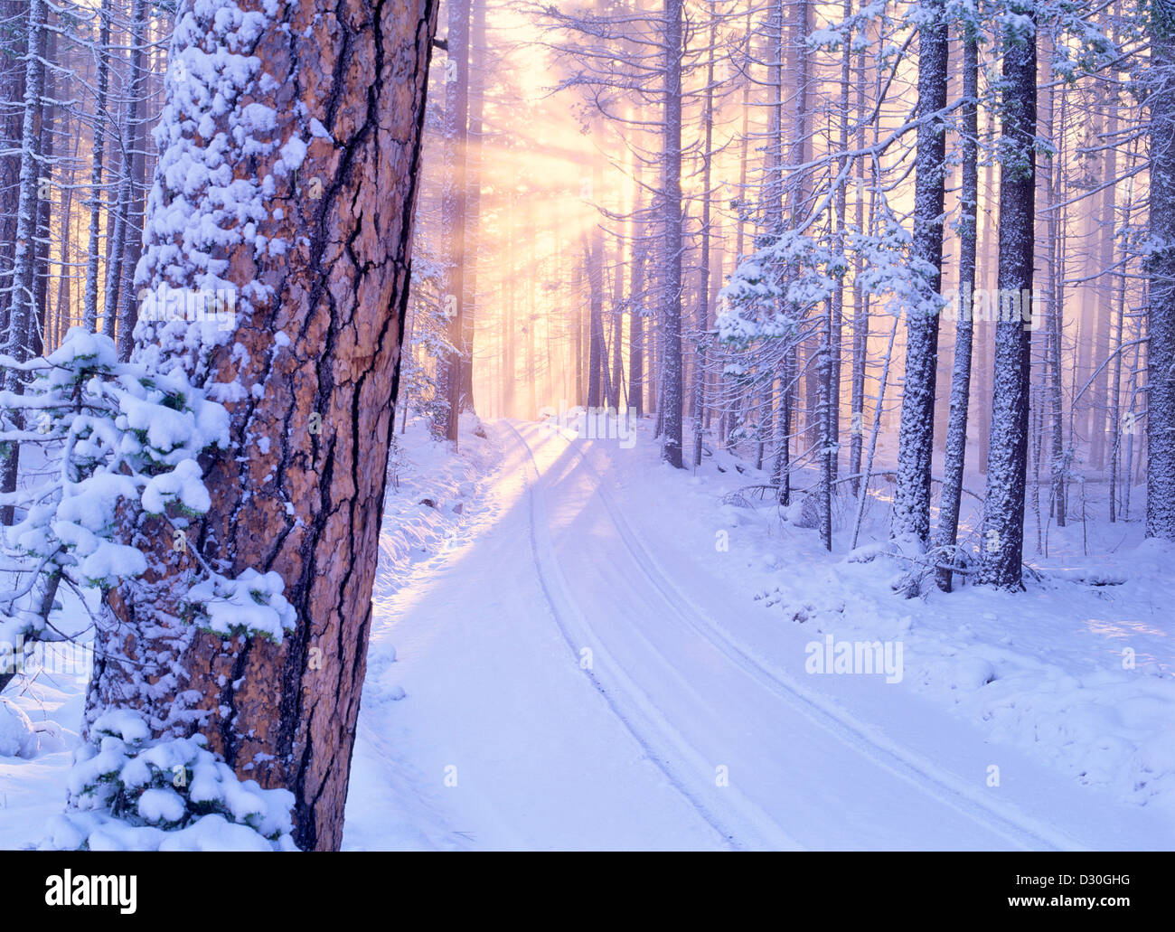 Road in Deschutes National Forest with snow and sunburst. Oregon. - Stock Image