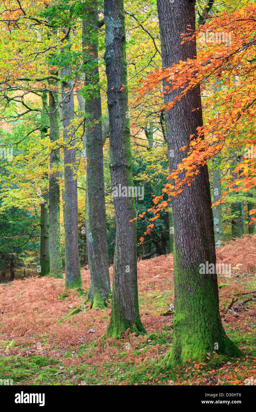 Tree's captured near the west shore of Derwent Water in the Lake District National Park - Stock Image