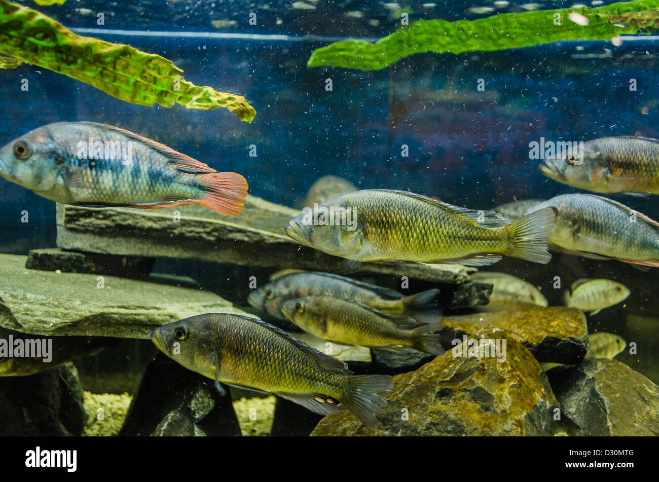 Aquarium with colorful pet fish at \