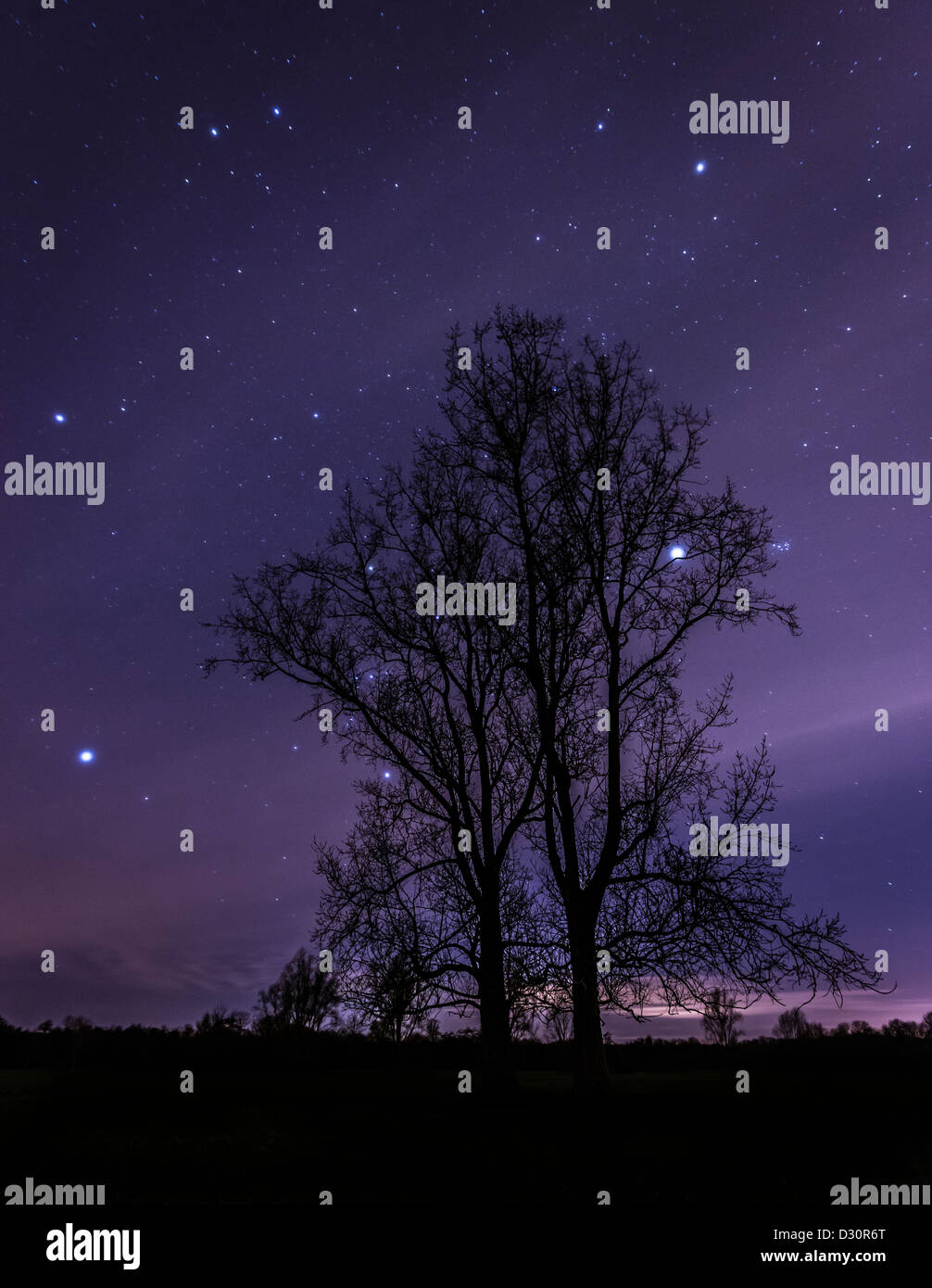 Silhouetted tress against a star filled sky, Warwickshire, England, UK - Stock Image