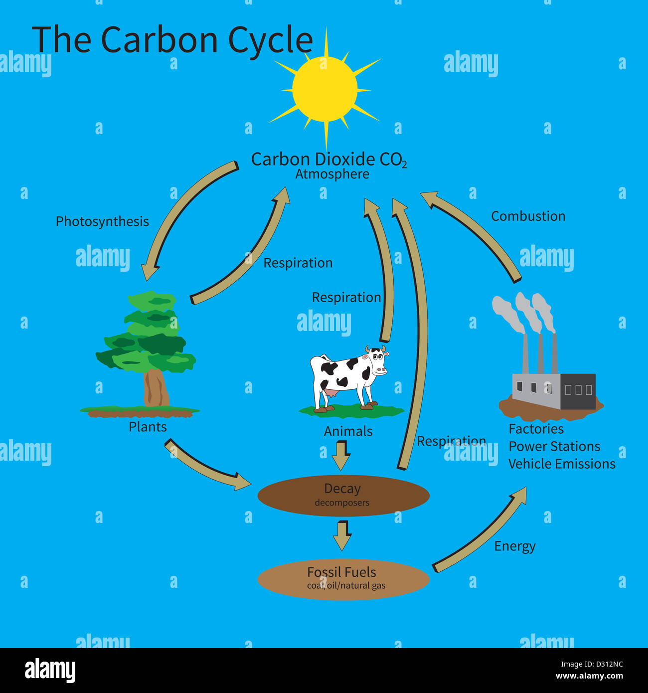 the carbon cycle showing how carbon is recycled in the environment