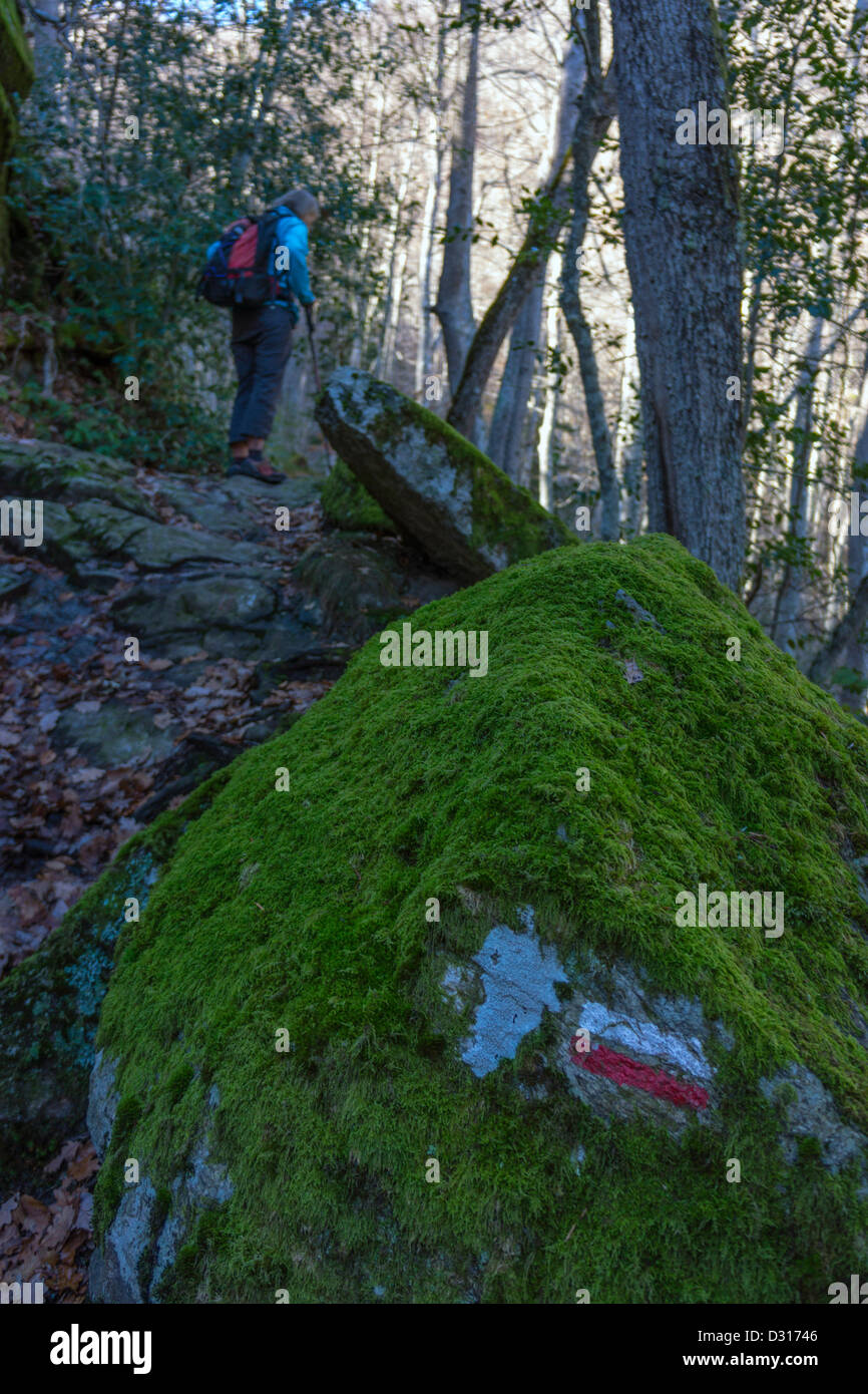 Lone walker with footpath waymark on mossy boulder in orest of beech trees in the winter, French Pyrenees, - Stock Image