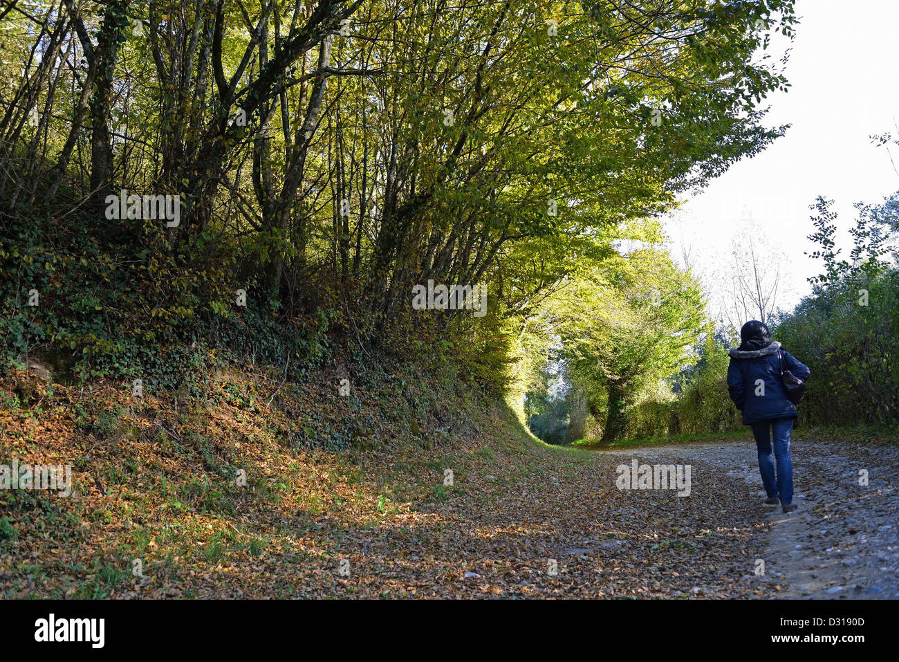Woman walking on a quiet lonely forest track - Stock Image
