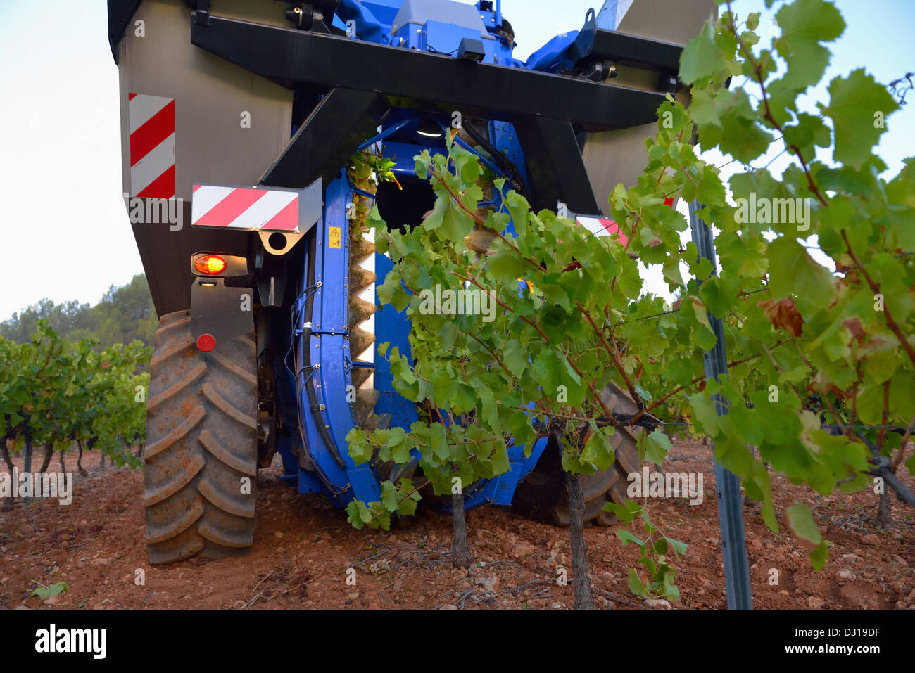 Grape combine harvester machine in vineyards near Sainte-Victoire mountain, Trets, Rhone region, France - Stock Image