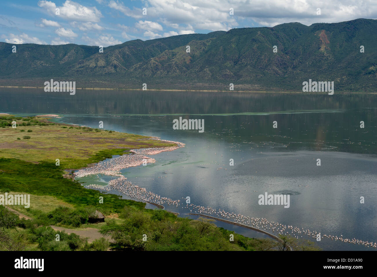 Lesser Flamingos (Phoenicopterus minor) in Lake Bogoria National Reserve, Rift Valley, Kenya Stock Photo