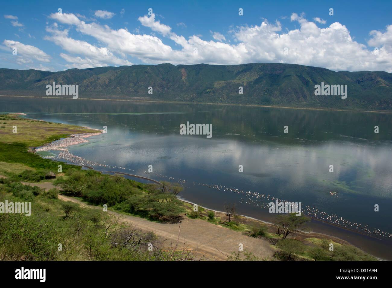 Lesser Flamingos (Phoenicopterus minor) in Lake Bogoria National Reserve, Rift Valley, Kenya Stock Photo
