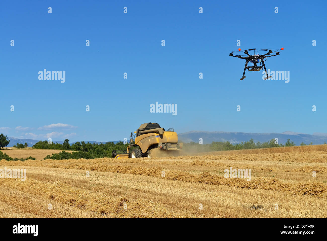 Drone - Unmanned Aerial Vehicle (UAV) photographing / filming combine harvester in wheat field in summer , France - Stock Image