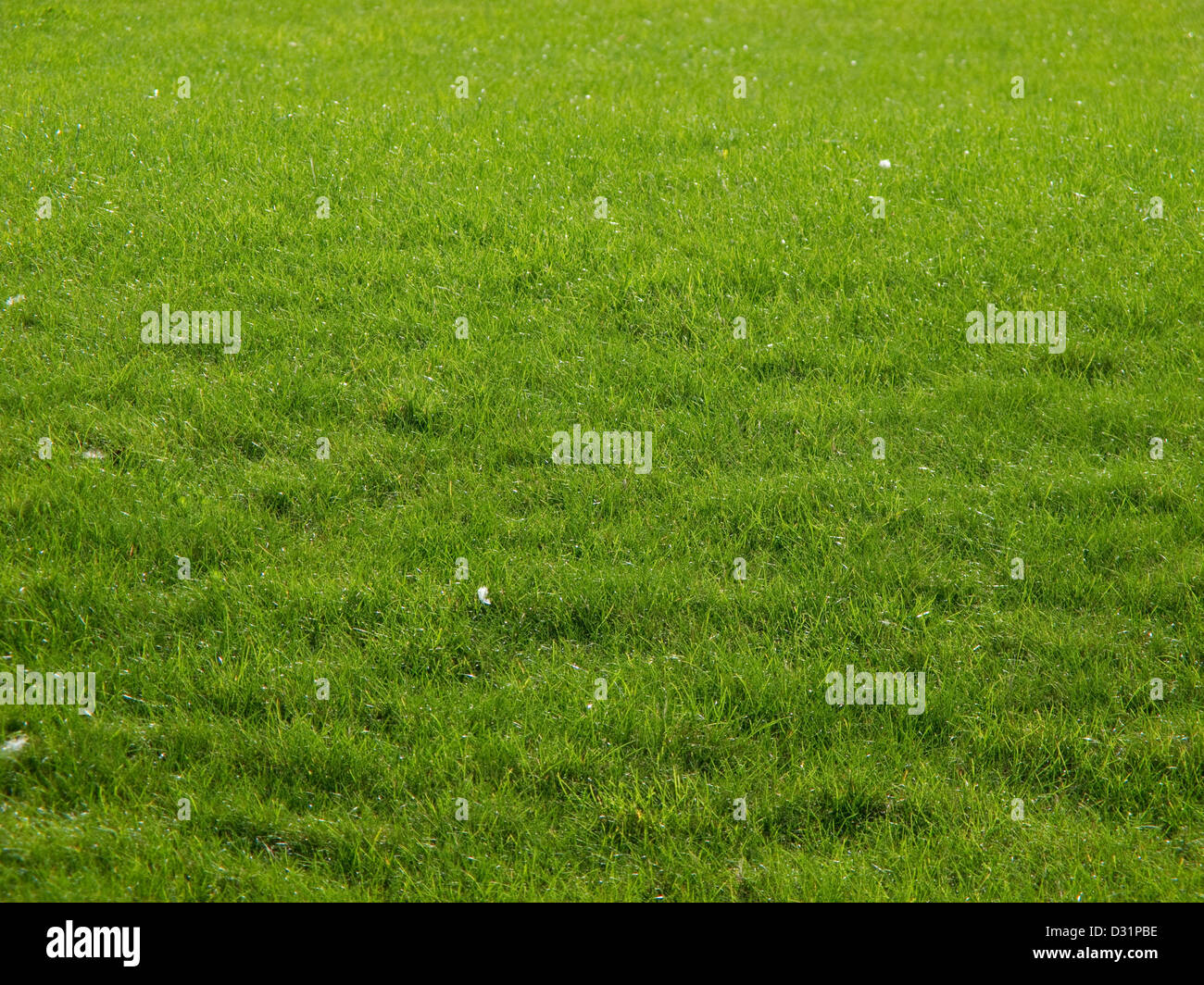 green summer meadow, grass, back light and low depth of field in the background - Stock Image