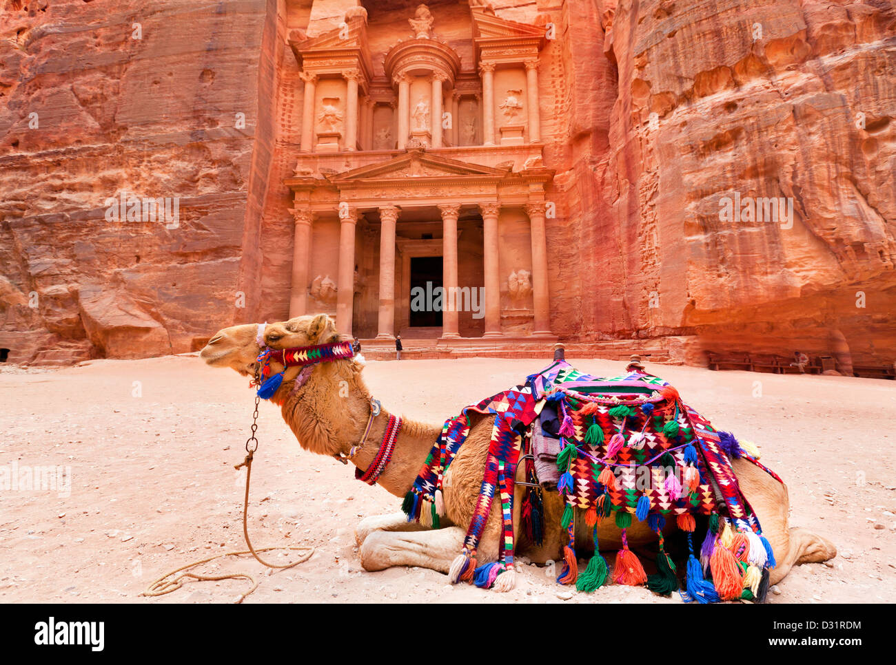 Bedouin camel rests near the treasury Al Khazneh carved into the rock at Petra, Jordan - Stock Image