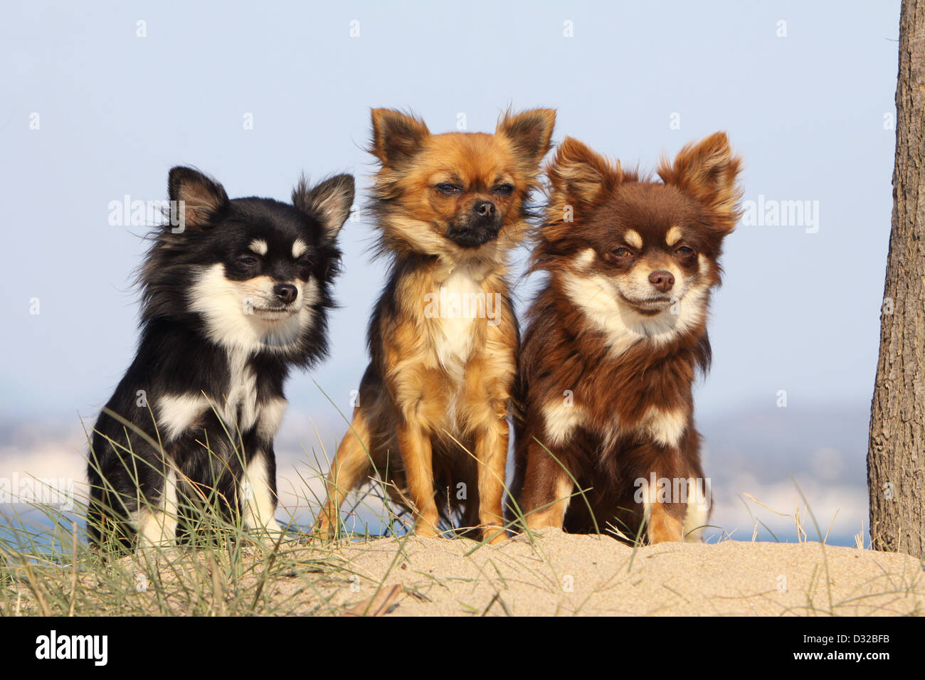 Group Of Dogs Different Breeds Stock Photos Group Of Dogs