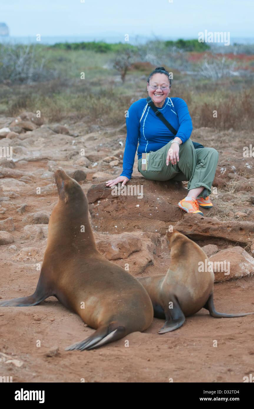 Woman tourist and Galapagos Sea Lions, North Seymour island, Galapagos - Stock Image