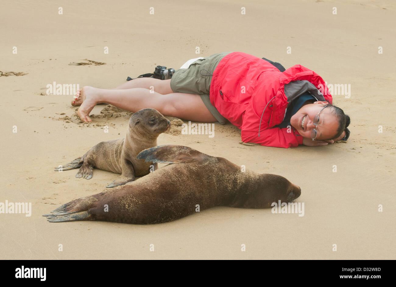 Tracey Lee and Galapagos Sea Lions, Isabela island, Galapagos - Stock Image