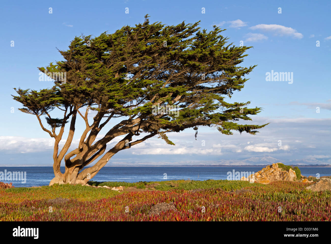 Tree with wind - Stock Image