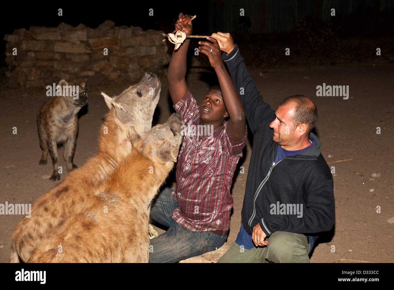 Tourist feeding the Hyenas, Harar, Ethiopia - Stock Image