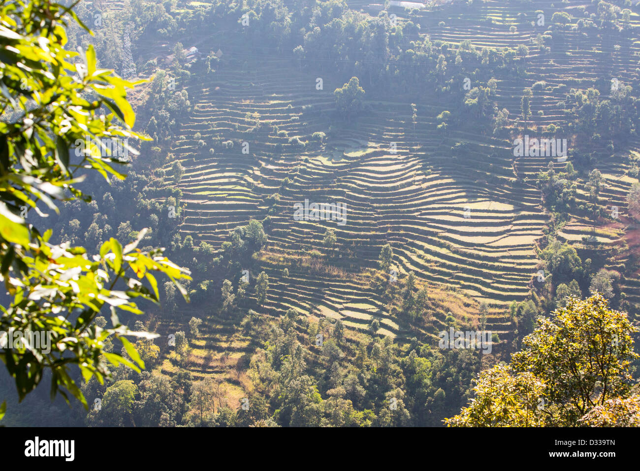 Subsistence farming in the Annapurna Himalayas in Nepal. The terracing has been developed over centuries - Stock Image