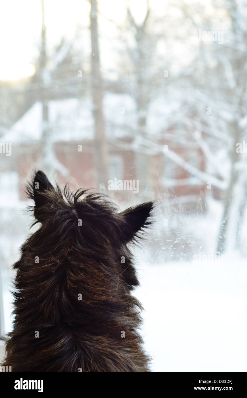 dog looking out the window in winter - Stock Image
