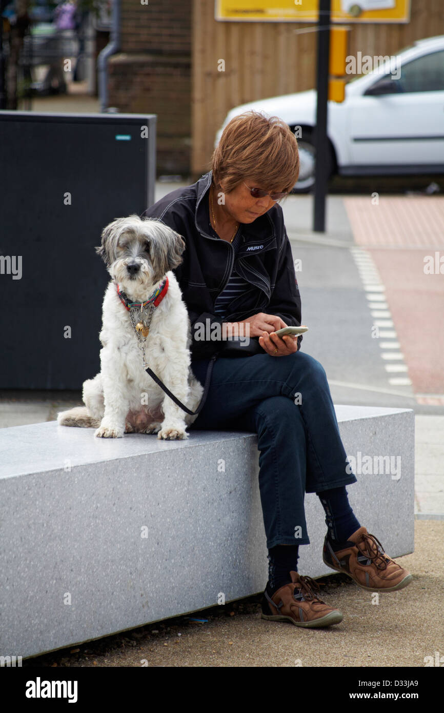 Woman using phone with dog on lead waiting patiently at Cowes, Isle of Wight in June - Stock Image
