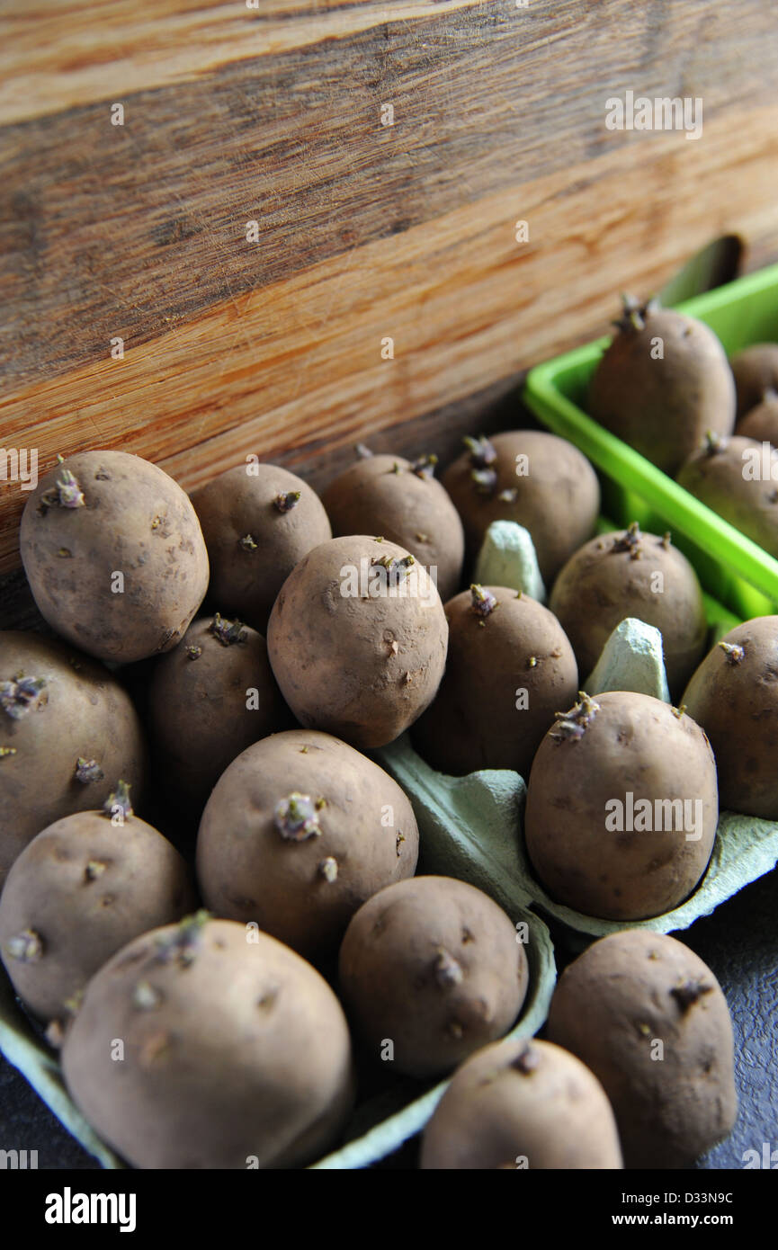 Potatoes sprouting near a window. - Stock Image