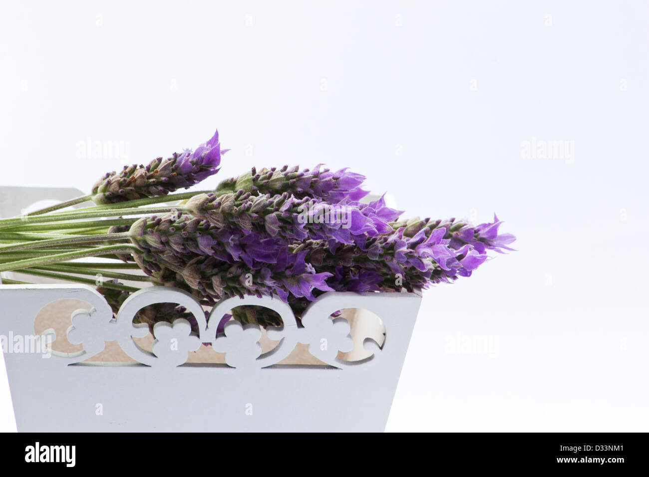 Lavender flowers on a white tray on white background - Stock Image