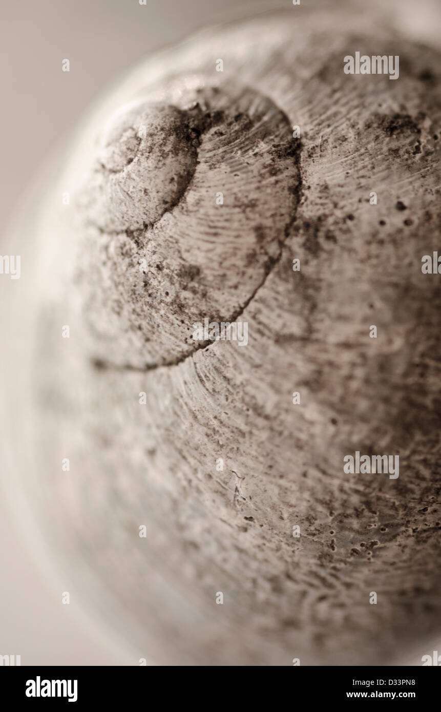 close up macro shallow depth of field image of a garden snail shell - Stock Image