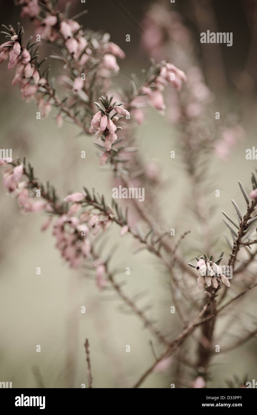 Close up shallow depth of filed image of plant materials and pink flowers in garden nature natural - Stock Image