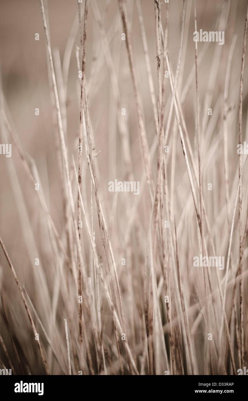 Close up of moorland grasses woody vegetation - Stock Image