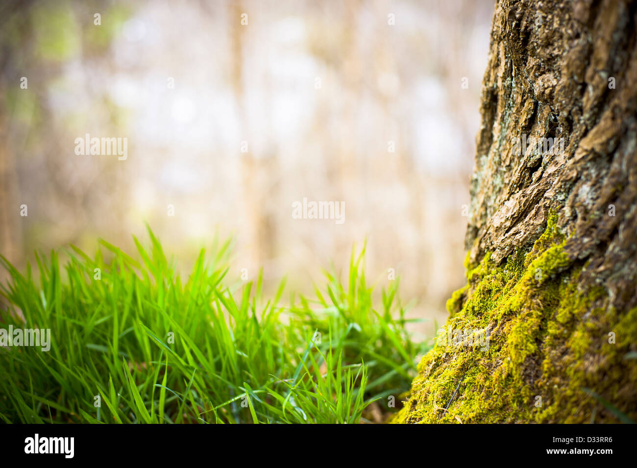 Tree trunk bark with moss and blades of green grass - Stock Image