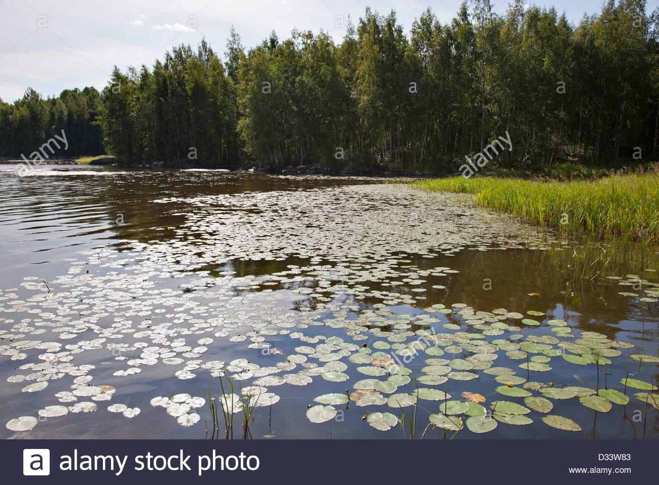 rautavesi lake,vammala village,finland,europe - Stock Image