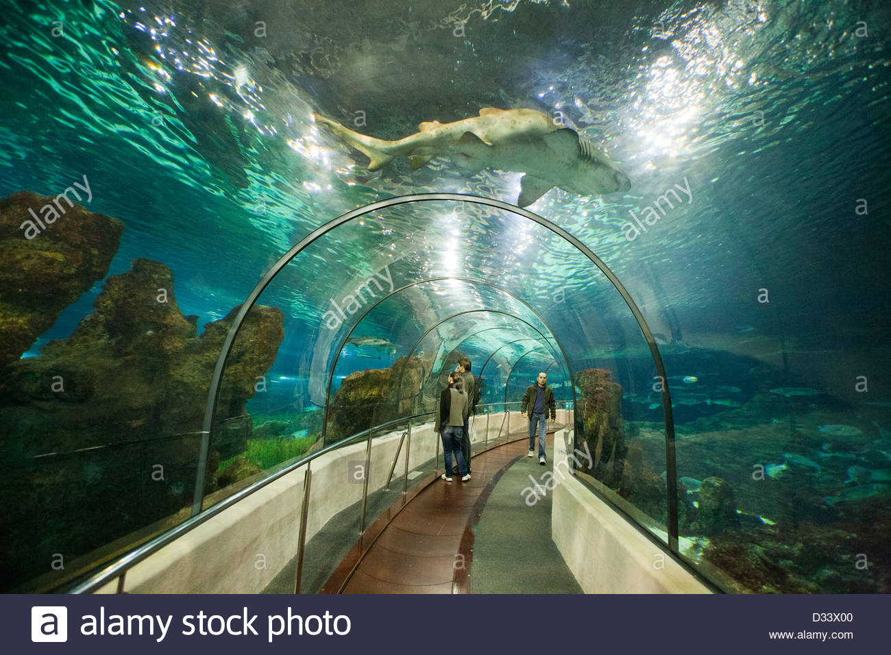 shark,aquarium,barcelona,catalonia,spain - Stock Image