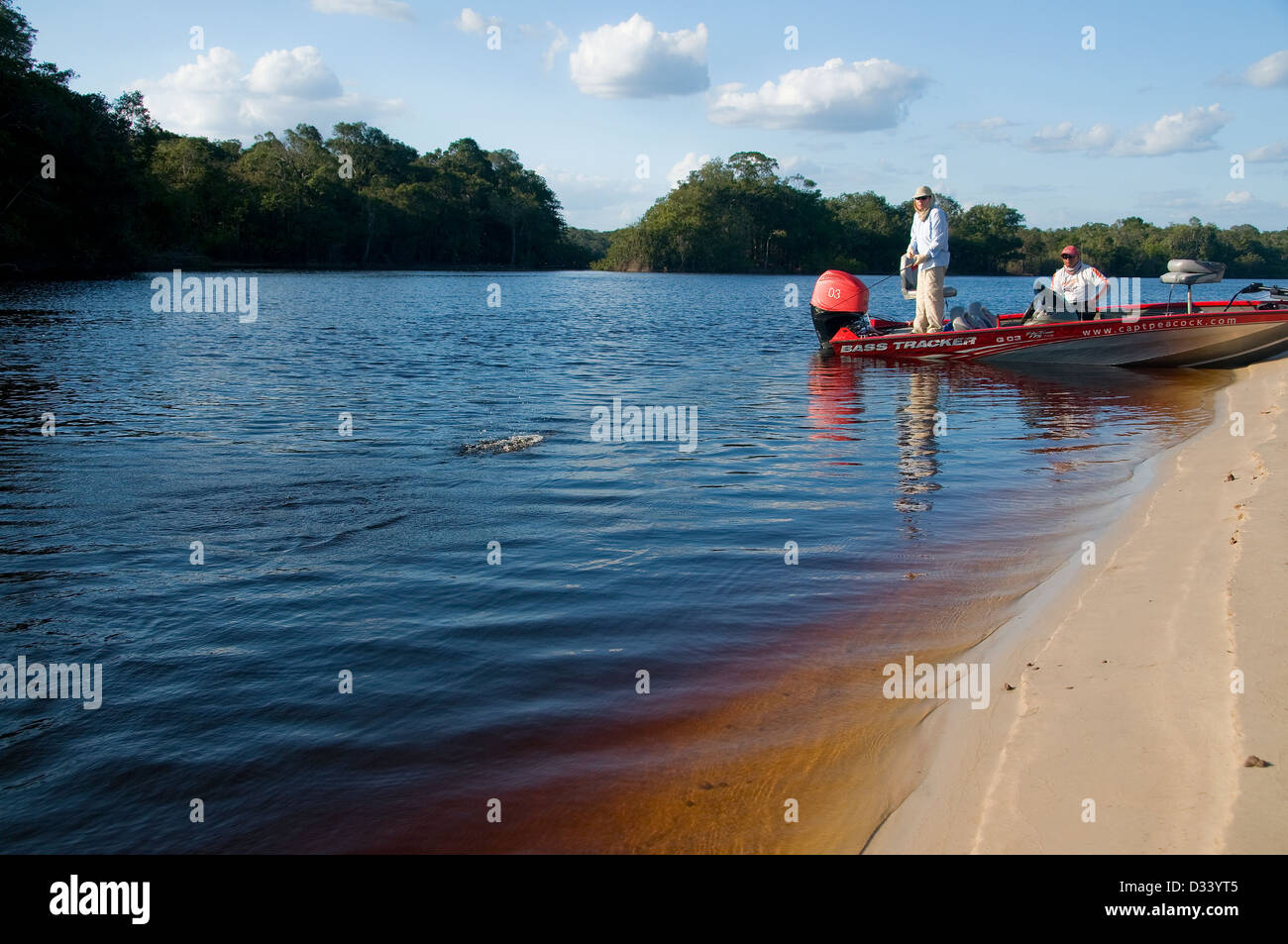 An angler fishes a topwater lure for peacock bass off a sandbar in the Rio Negro in Brazil's Amazon Basin. - Stock Image
