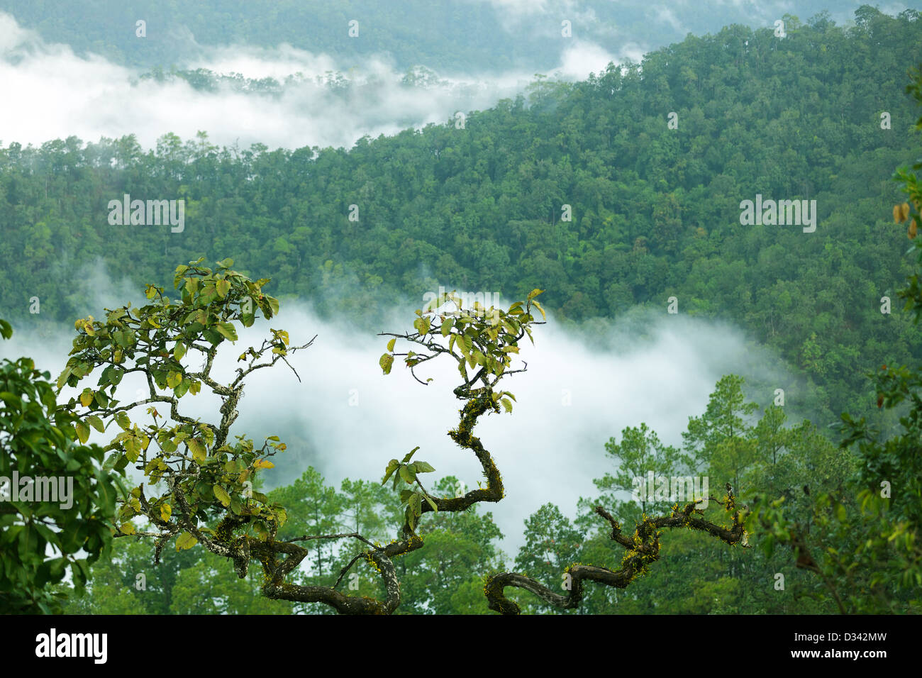 Rainforest landscape in Morning fog, Doi Kiew Lom viempoint, Pangmapha, Thailand - Stock Image