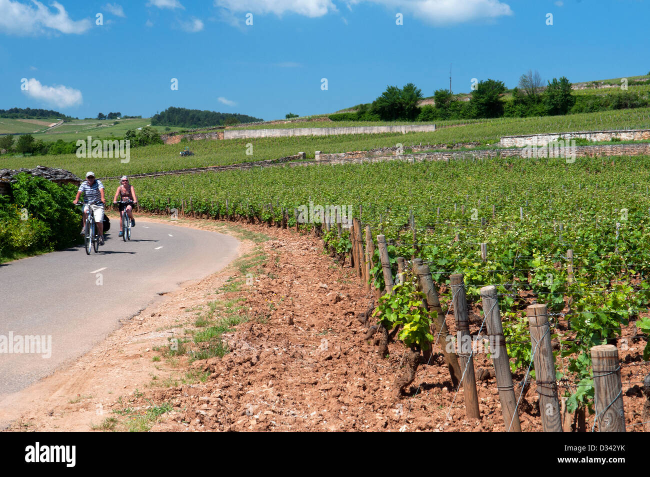 Cyclists Beaune Bourgogne France - Stock Image