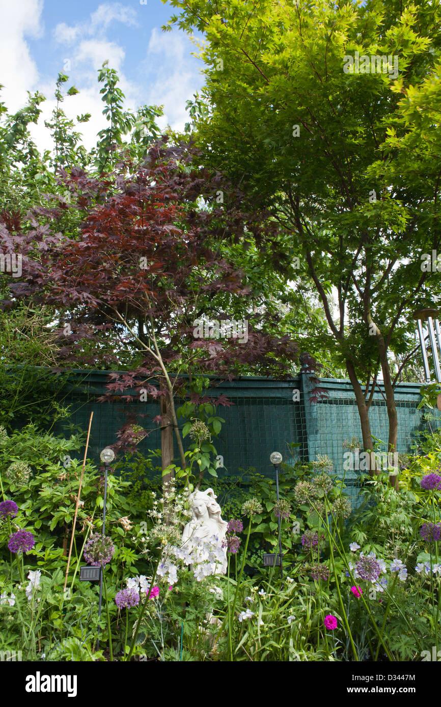 Borders of perennials and trees; Allium, Geranium, Acer Palmatum 'Atropurpureum', Acer palmatum 'Sango - Kaku'. Stock Photo