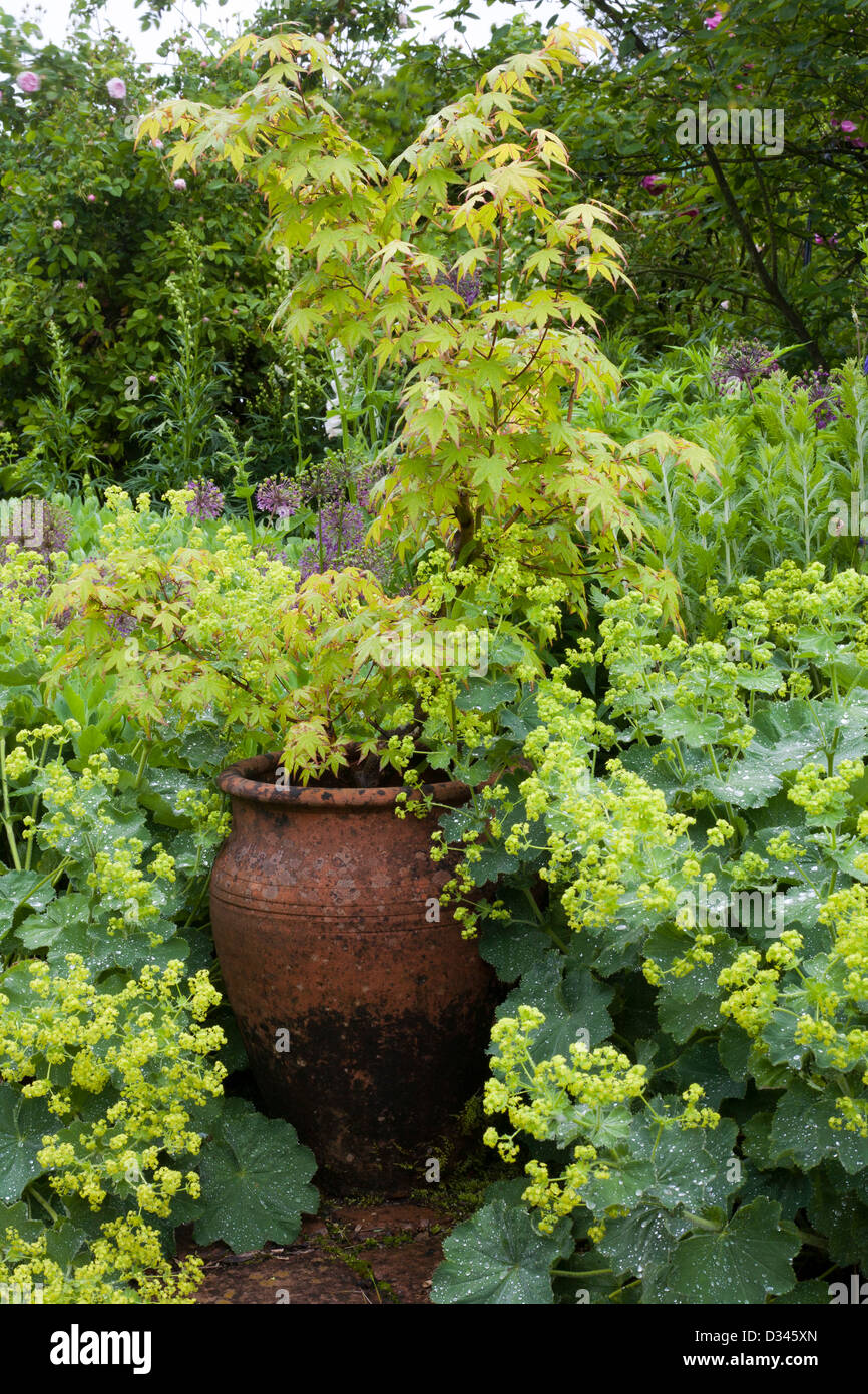 Decorative urn and spring borders of perennials and Japanese maple. - Stock Image