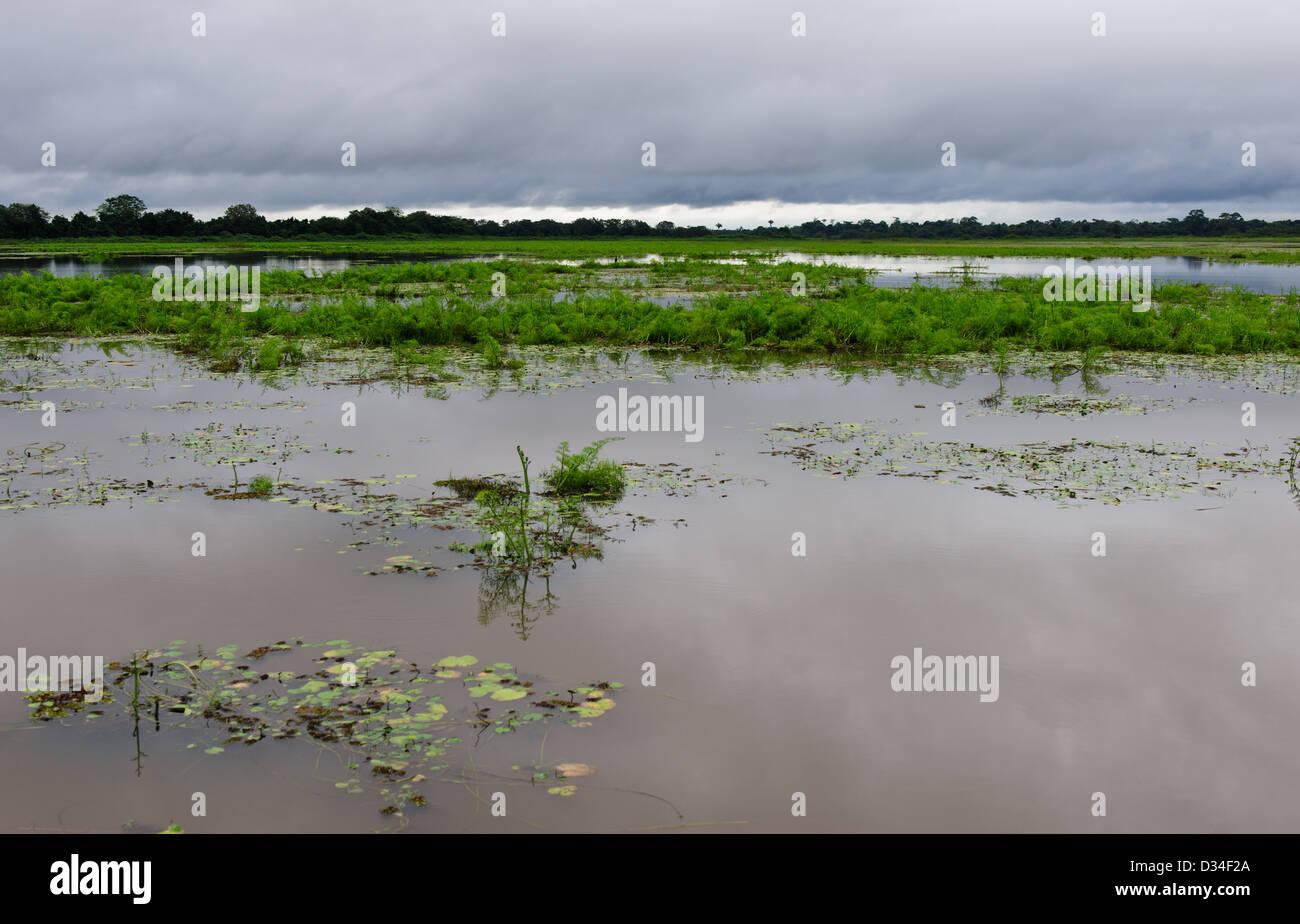 The wetlands of Caño Negro Wildlife Refuge. Costa Rica. - Stock Image