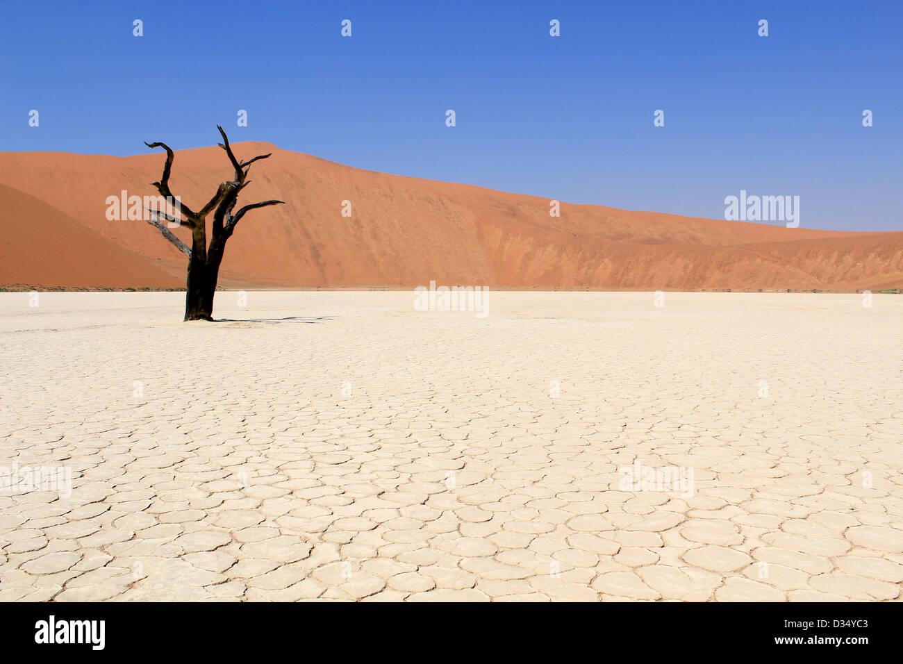 Sossusvlei dead valley landscape in the Nanib desert near Sesriem, Namibia - Stock Image