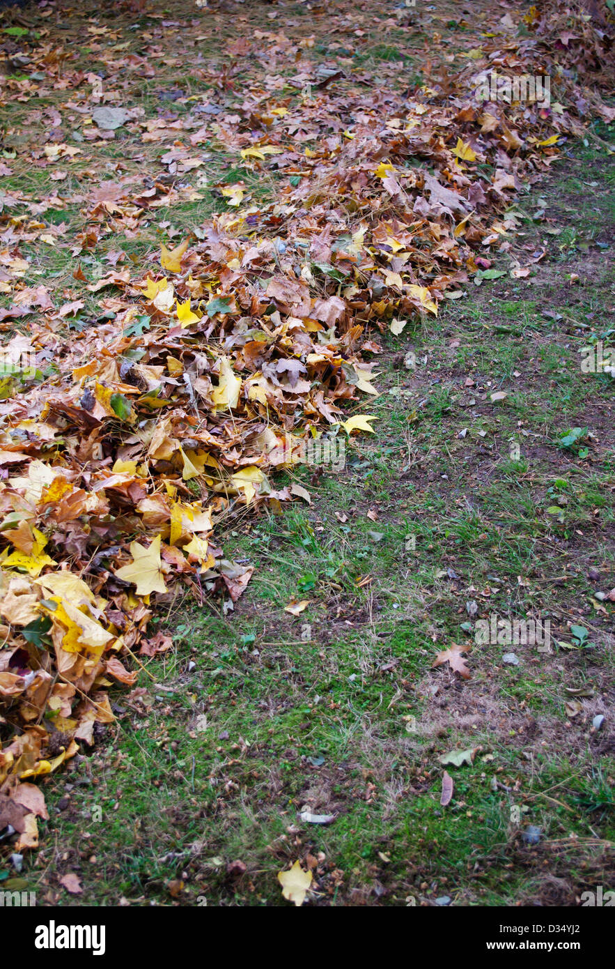 geometrically diagonal half raked yard corner to corner - Stock Image