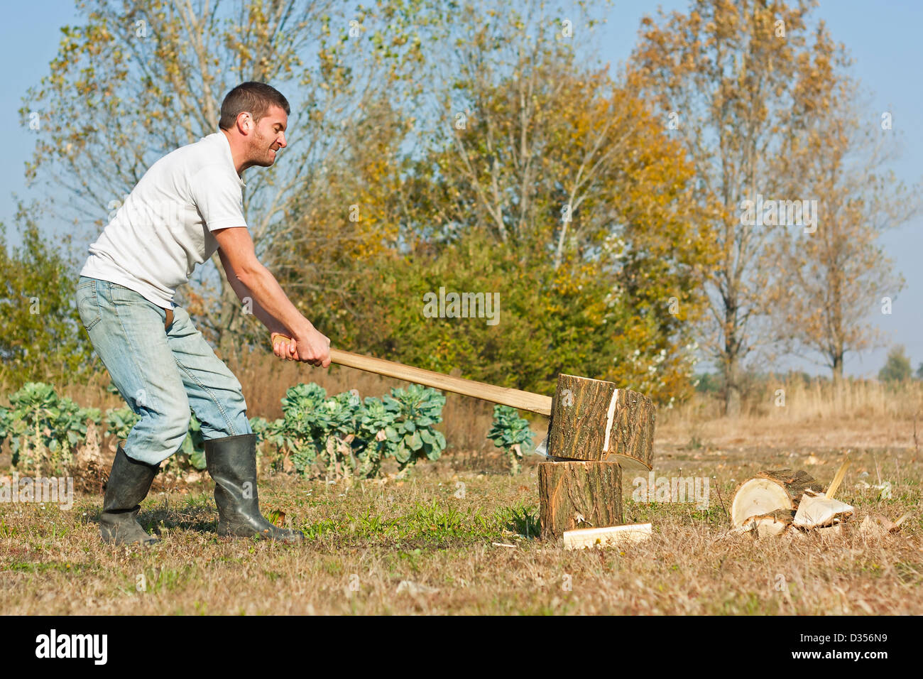 Male figure chopping or slitting winter wood against a rural Autumn backdrop - Stock Image