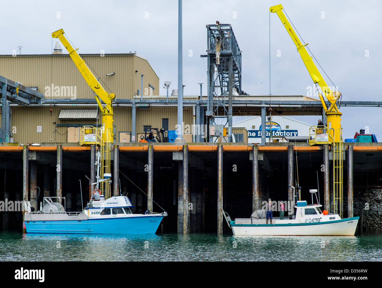 Commercial fishing boats unload their fresh catch of fish to