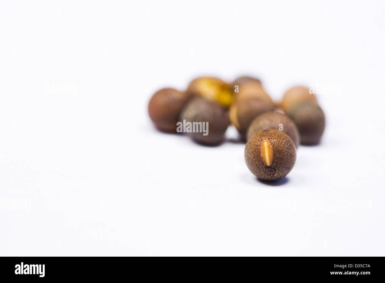 Lathyrus fragrantissima. Sweet pea seeds on a white background. - Stock Image