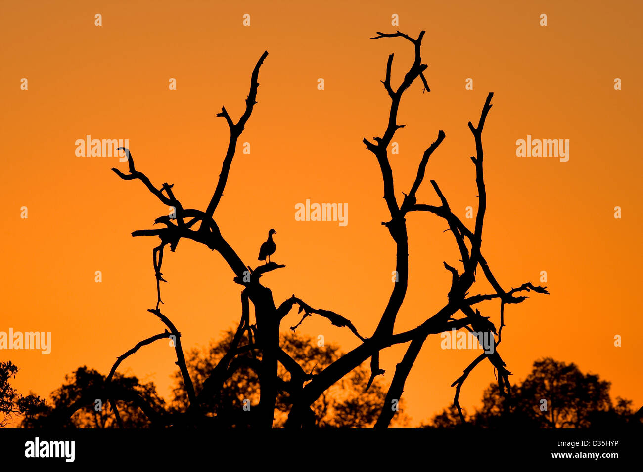 Sunrise over the African bush in the Kruger National Park. - Stock Image