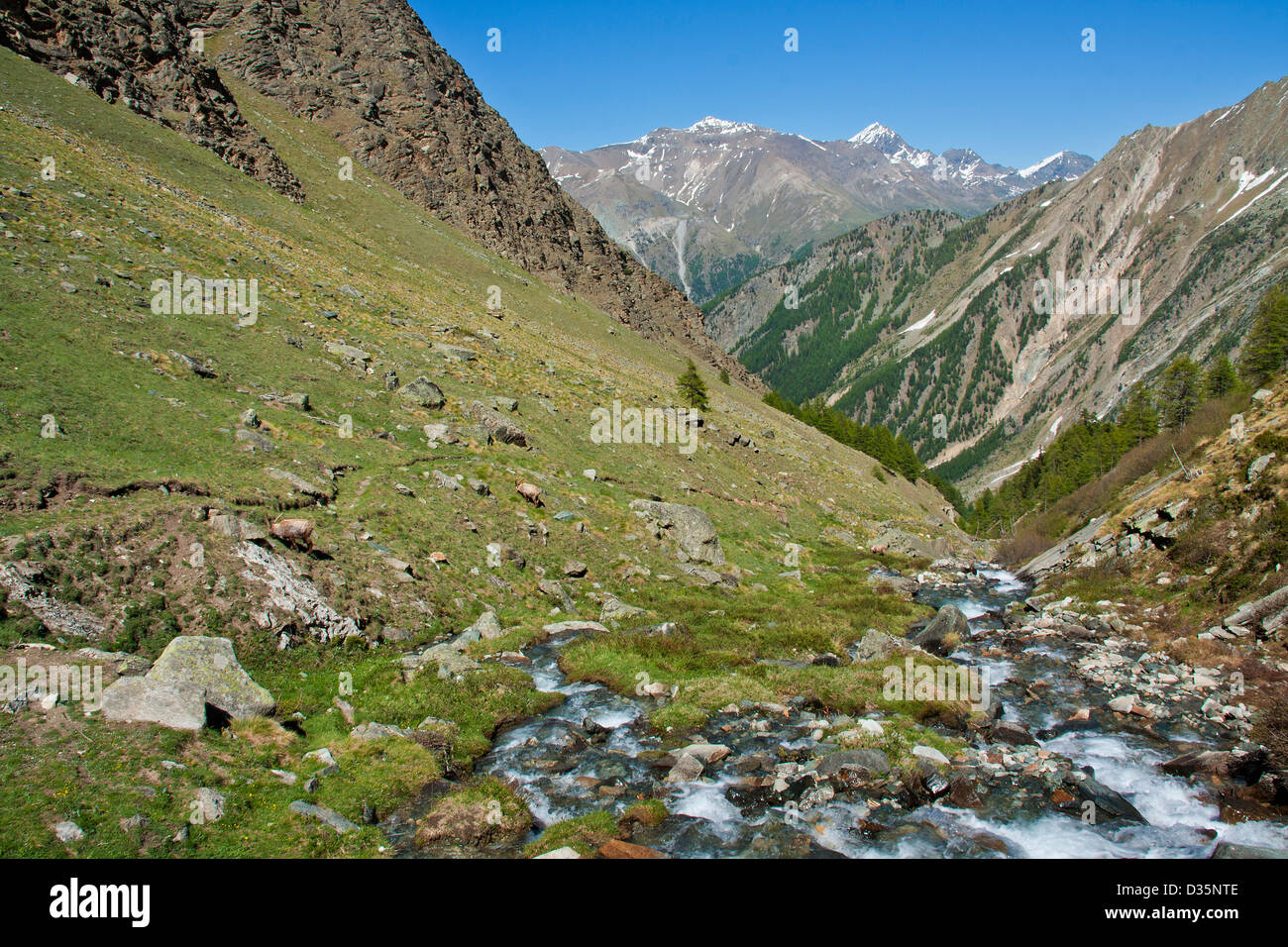 Panoramic view of Gran Paradiso National Park with snow clad peaks and a creek flowing in alpine grassland, italian - Stock Image
