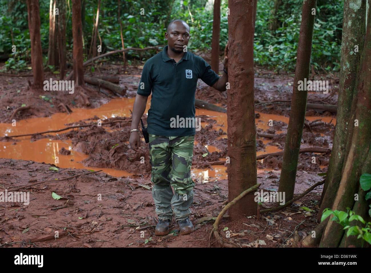 CAMEROON, 1st October 2012:  Ekodek Gatien, WWF Park Ranger, at a salt lick where a female forest elephant was recently - Stock Image