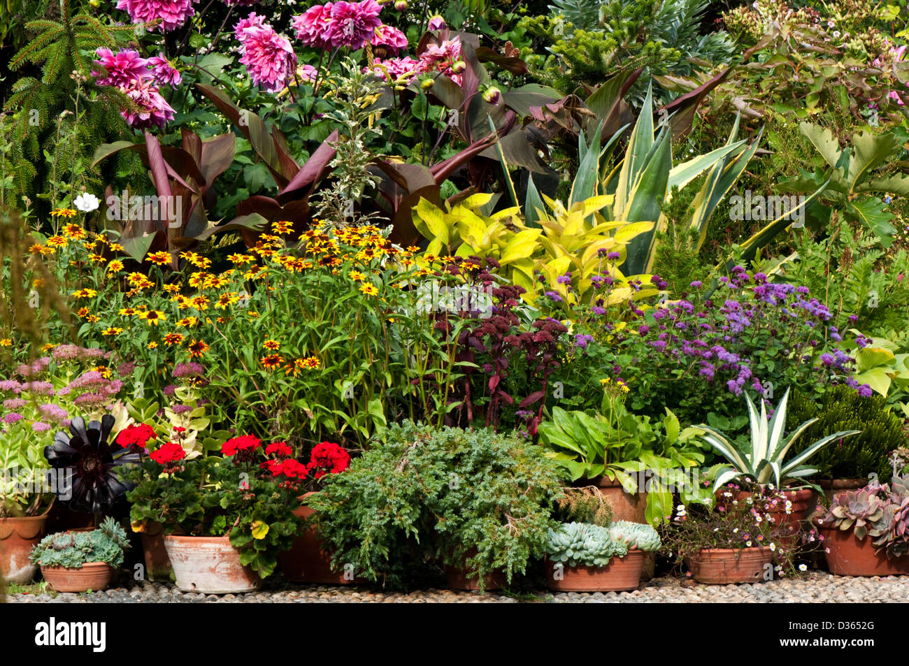 A group of potted plants of different varieties displayed on the ground. - Stock Image