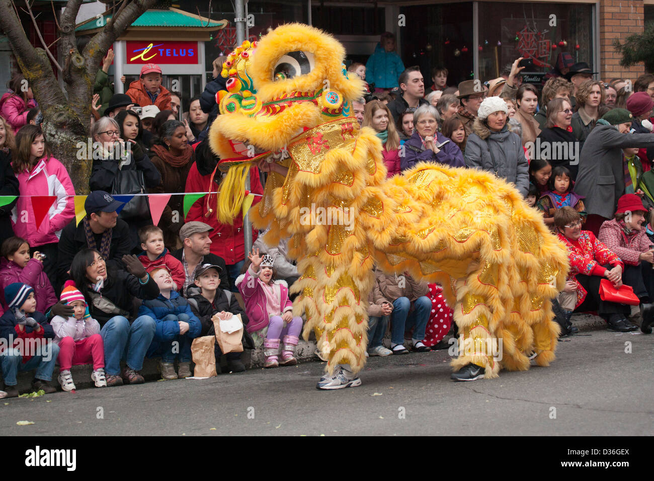 Lion Dance during Chinese New Year celebrations for Year of the Snake-Victoria, British Columbia, Canada. - Stock Image