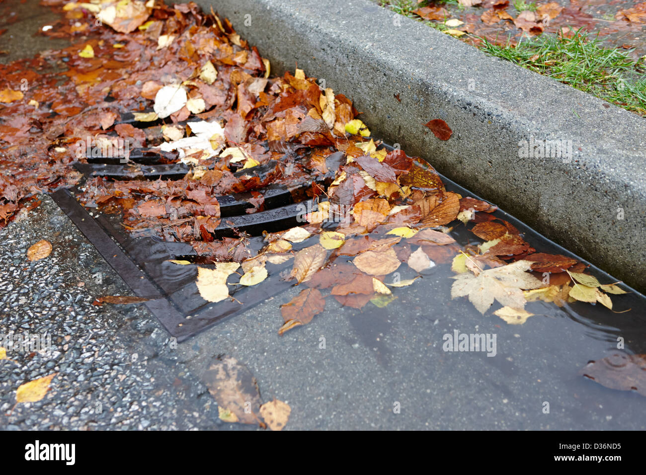 fallen autumn leaves blocking storm water run off drain Vancouver BC Canada - Stock Image
